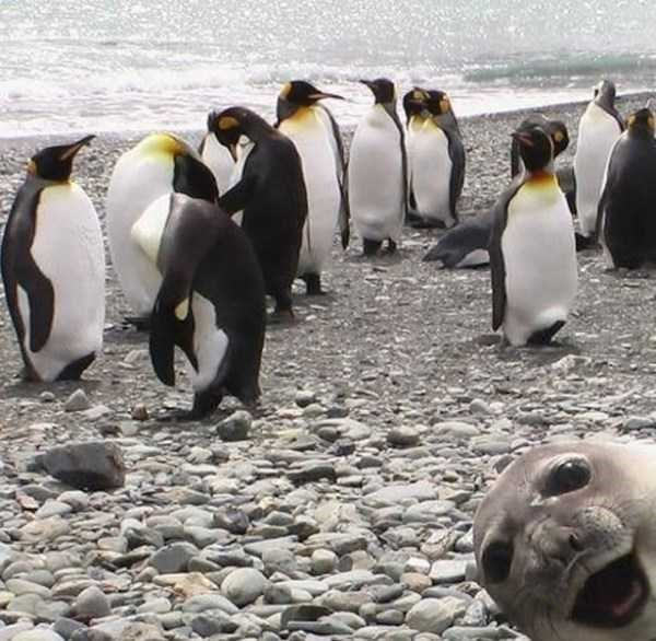 19 животных, которые не хотели, но испортили фото и стали их звездой!