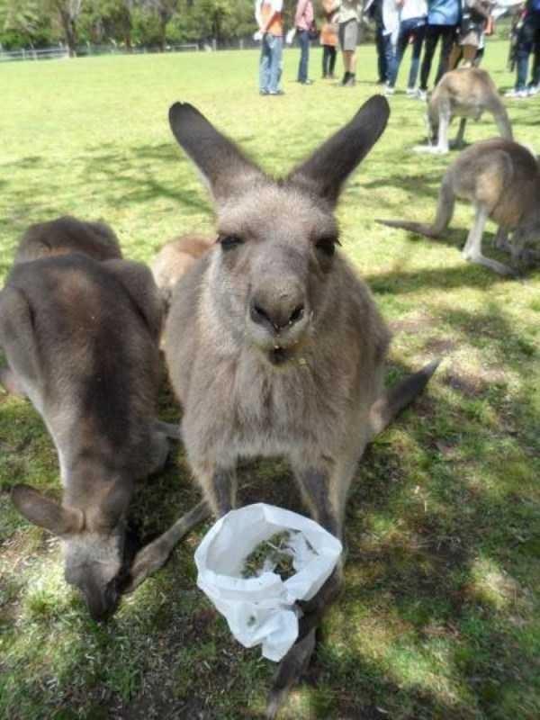 Тем временем в Австралии... рис 10