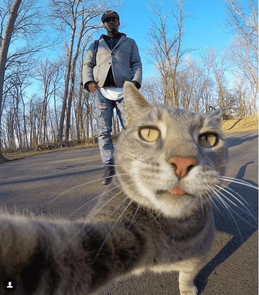 Селфи-кот покоряет сеть крутыми снимками! рис 7