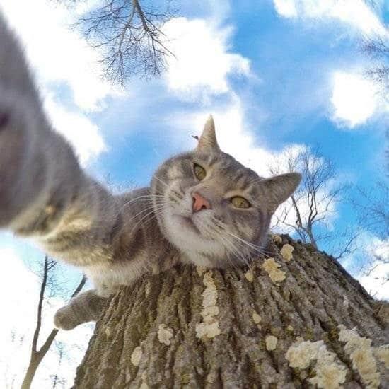 Селфи-кот покоряет сеть крутыми снимками! рис 8