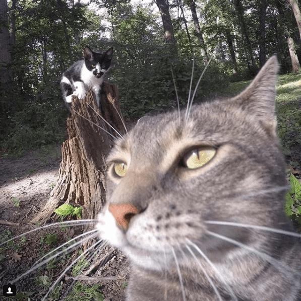 Селфи-кот покоряет сеть крутыми снимками! рис 9