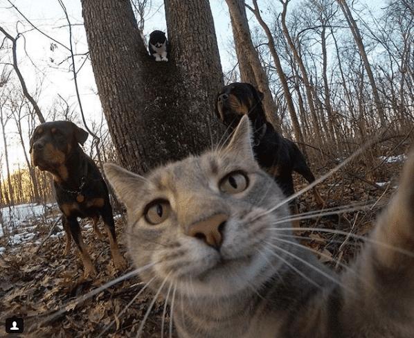 Селфи-кот покоряет сеть крутыми снимками! рис 10