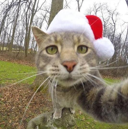 Селфи-кот покоряет сеть крутыми снимками! рис 11