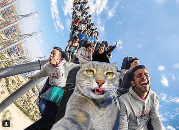 Селфи-кот покоряет сеть крутыми снимками! рис 12