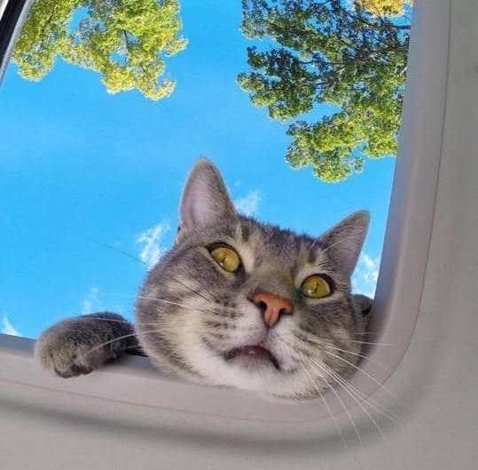 Селфи-кот покоряет сеть крутыми снимками! рис 13