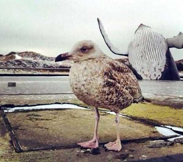 19 животных, которые не хотели, но испортили фото и стали их звездой! рис 12