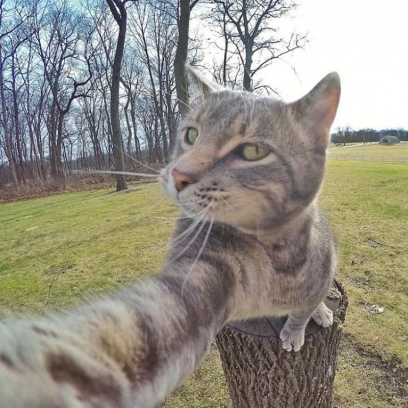 Селфи-кот покоряет сеть крутыми снимками! рис 15