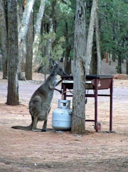 Тем временем в Австралии... рис 5