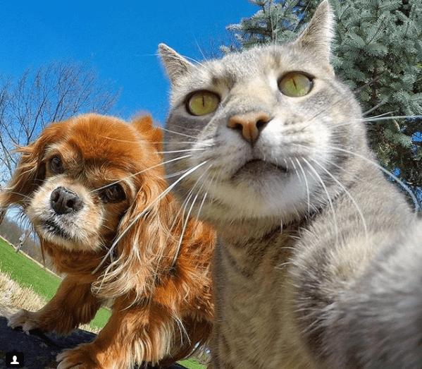 Селфи-кот покоряет сеть крутыми снимками! рис 16