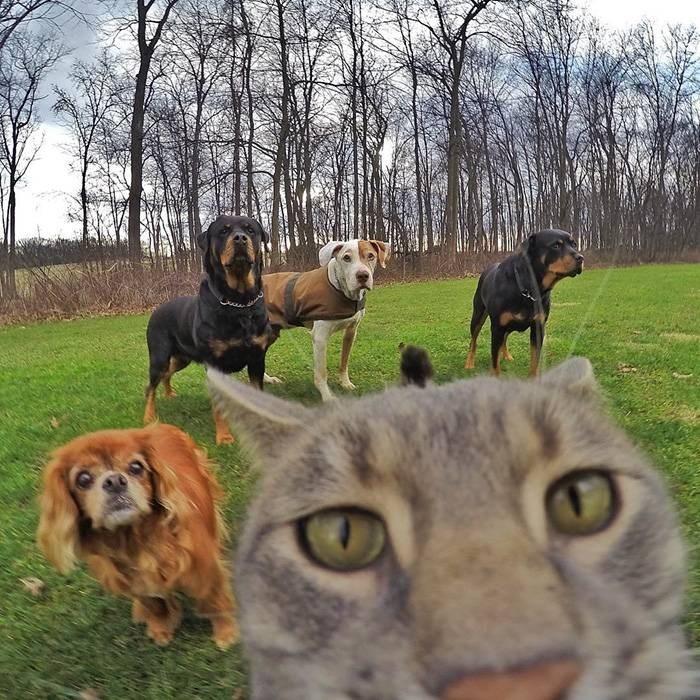 Селфи-кот покоряет сеть крутыми снимками! рис 17