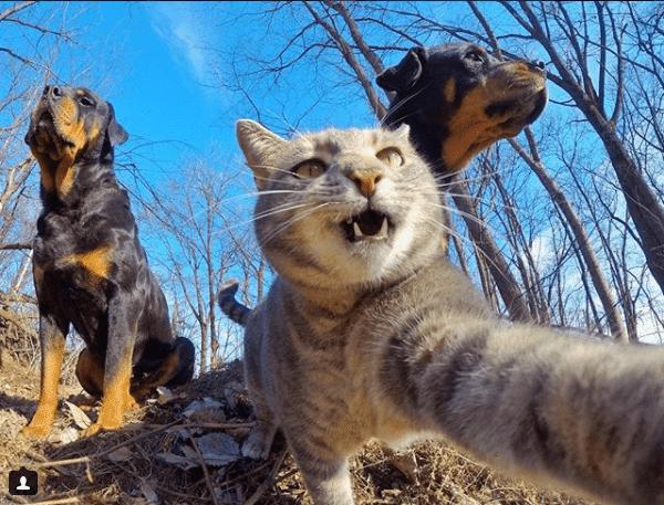 Селфи-кот покоряет сеть крутыми снимками! рис 18