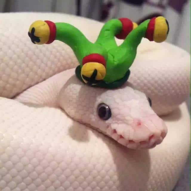 20 милых снимков змей в головных уборах! 2