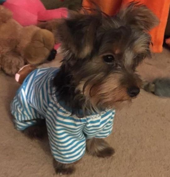 животные в пижамах 19
