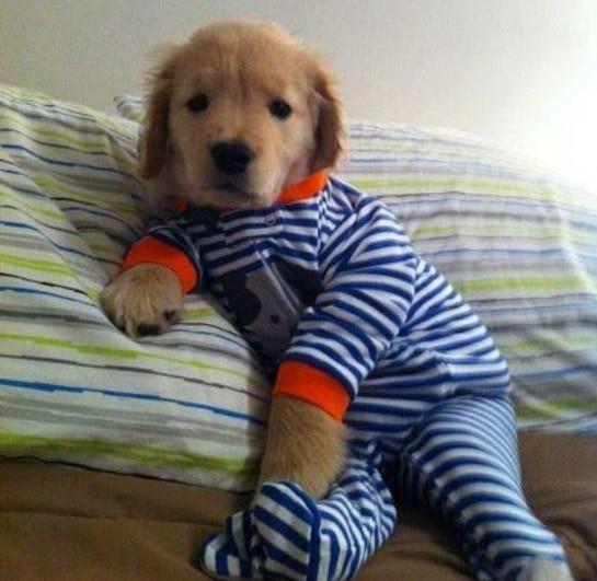 животные в пижамах 11