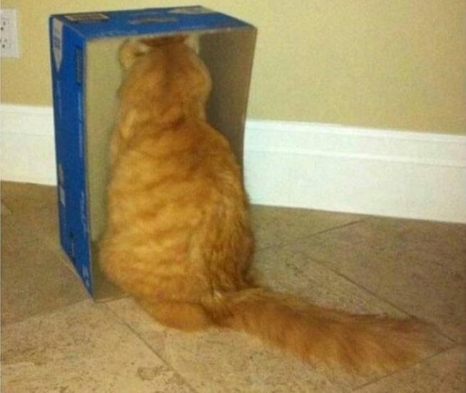 16+ твитов о котах, которые однозначно поднимут вам настроение! 12