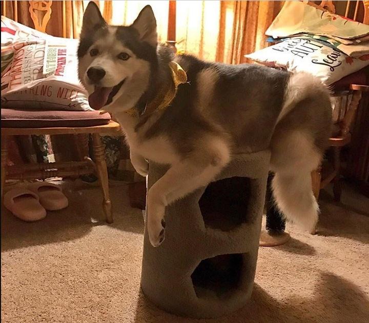 собака сидит на кошачьем домике