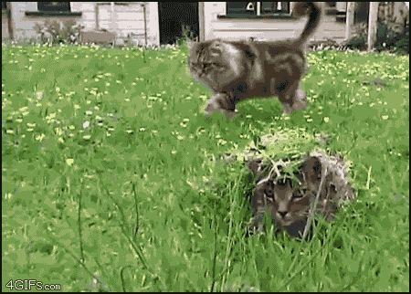 смешные коты 14
