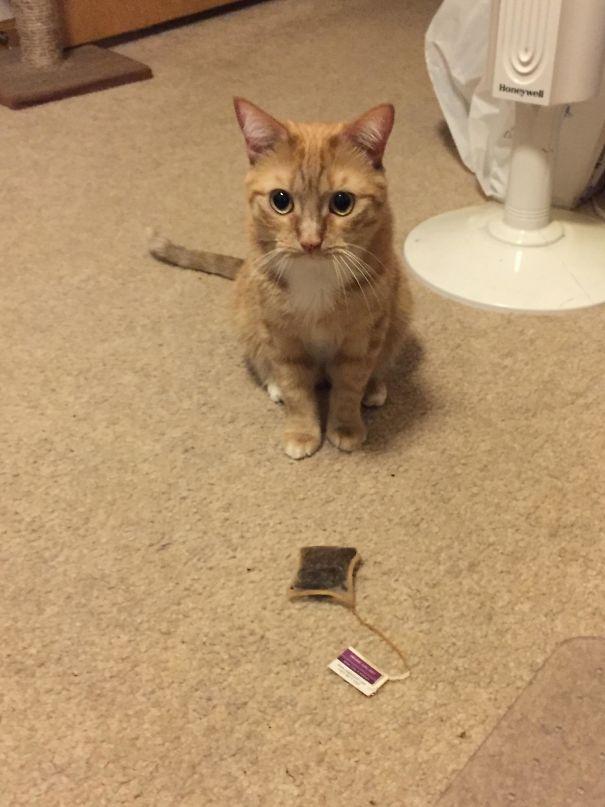 Fatal Error! 19 котов, которые забыли, как ими быть! 15