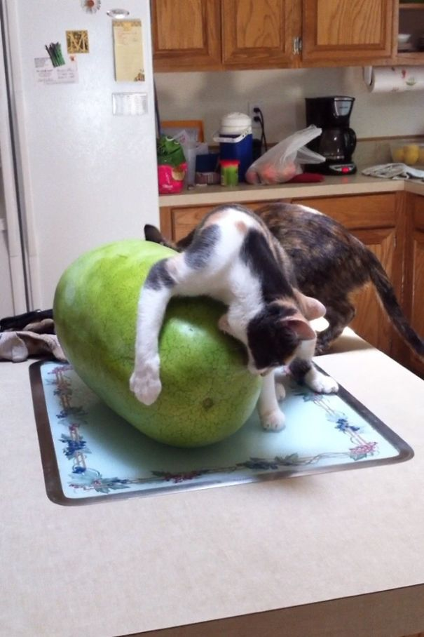 Смешные коты 17
