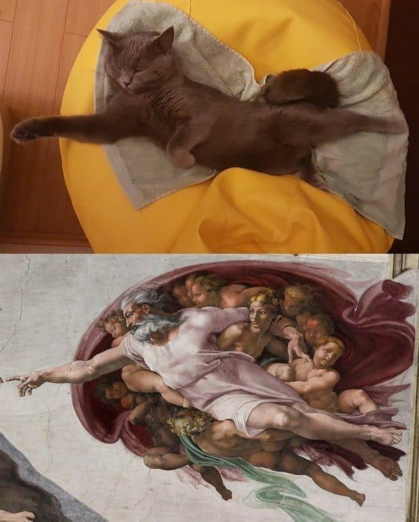 смешные коты 12