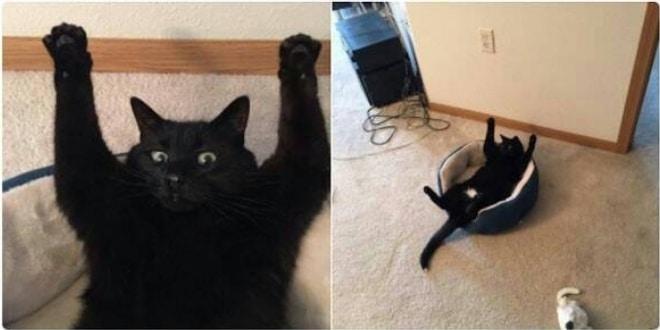 16+ твитов о котах, которые однозначно поднимут вам настроение! 18