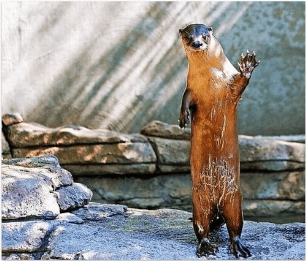 15+ смешных животных, передающих тебе привет!