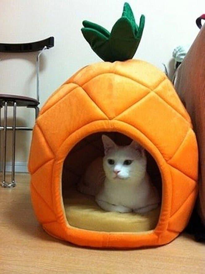 кошка сидит в домике