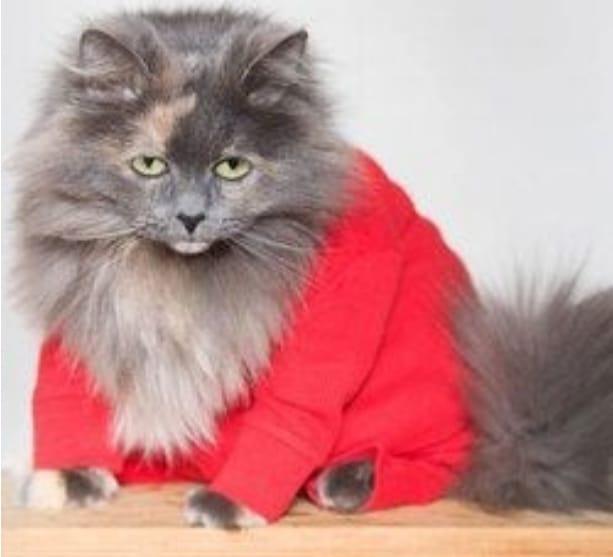 животные в пижамах 17