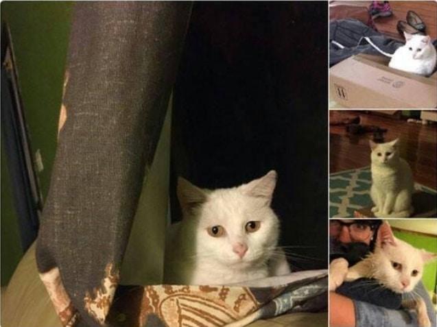 16+ твитов о котах, которые однозначно поднимут вам настроение! 9