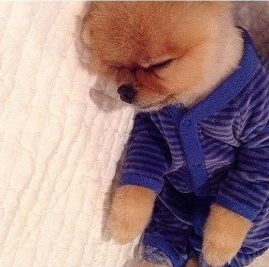 животные в пижамах 10
