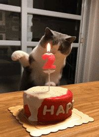 смешные коты 10