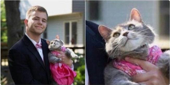 16+ твитов о котах, которые однозначно поднимут вам настроение! 5