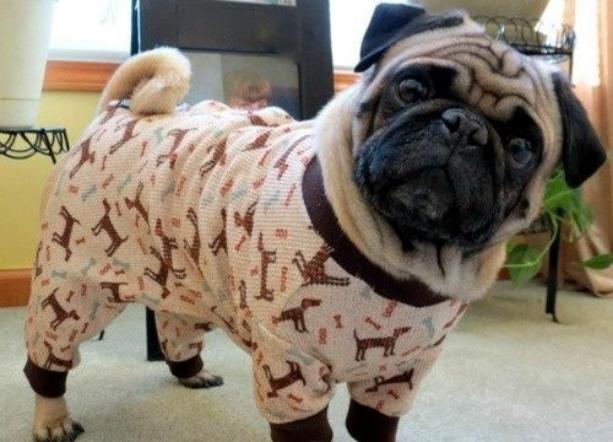 животные в пижамах 6