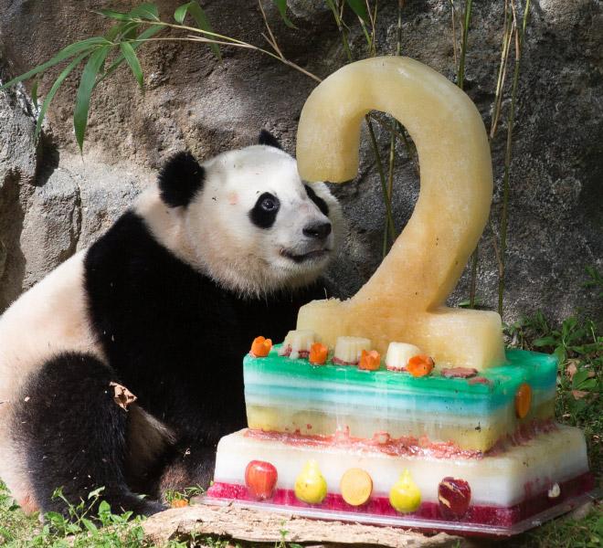 панды 10