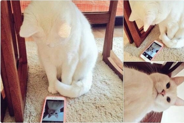 16+ твитов о котах, которые однозначно поднимут вам настроение! 3