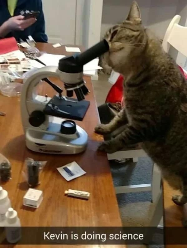 кот смотрит в микроскоп