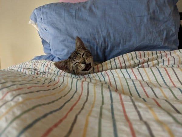 кот под одеялом