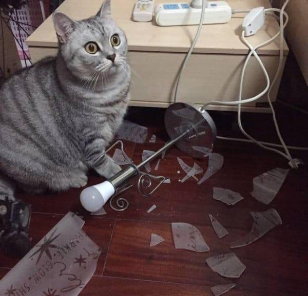 смешные коты 8
