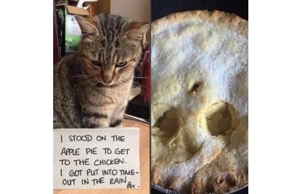 коты 4
