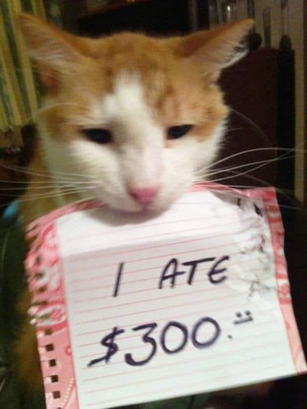 коты 10