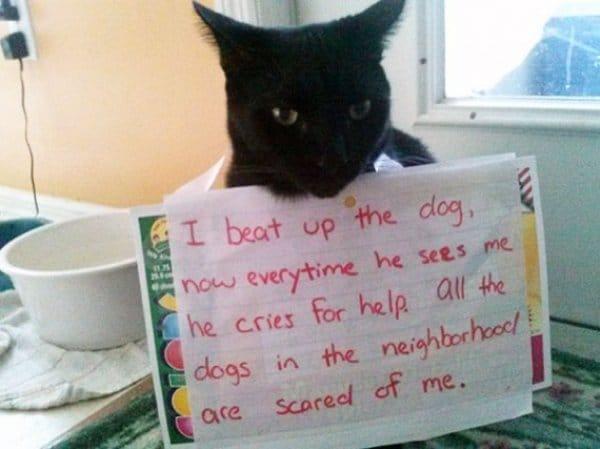 коты 7