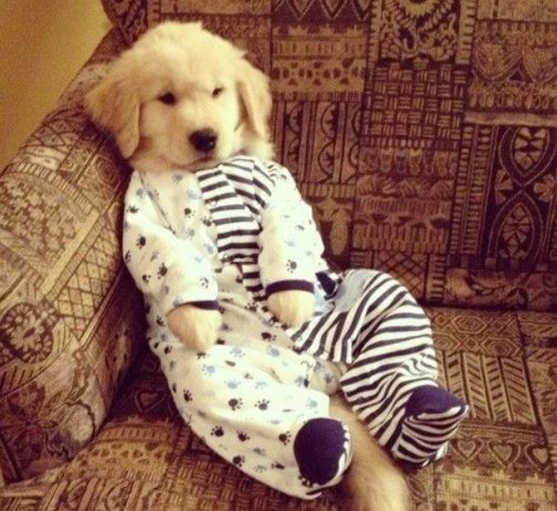 животные в пижамах 3