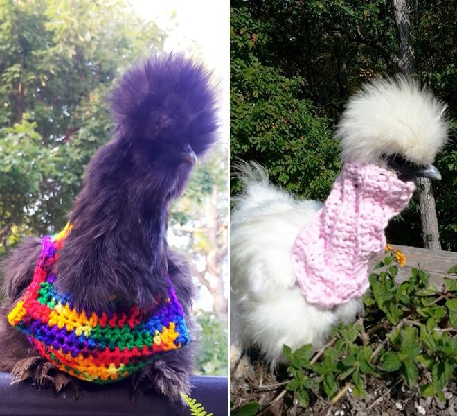 Курицы в свитерах 1
