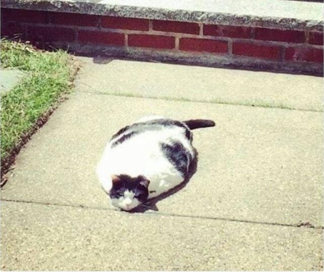 16+ твитов о котах, которые однозначно поднимут вам настроение!