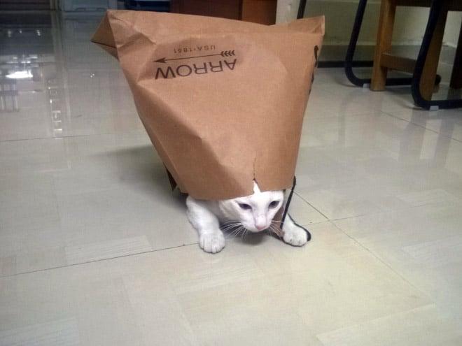 Коты и пакеты 6
