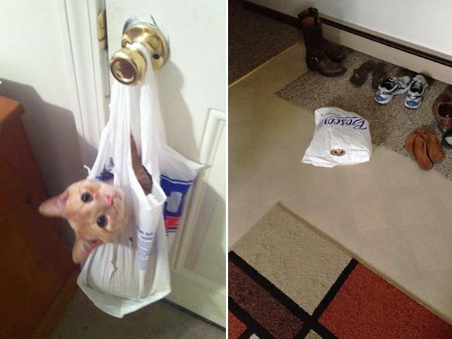 Коты и пакеты 5