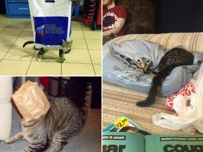 Коты и пакеты 3