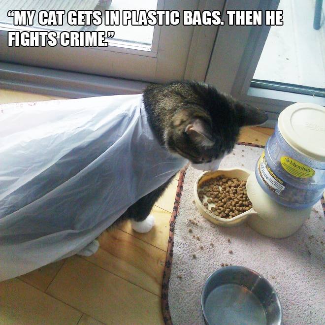Коты и пакеты 2