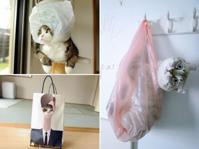 Коты и пакеты 1