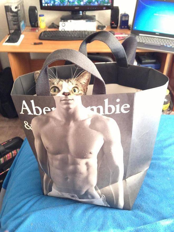 Коты и пакеты